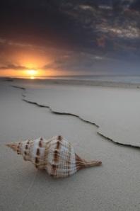 caracol en playa