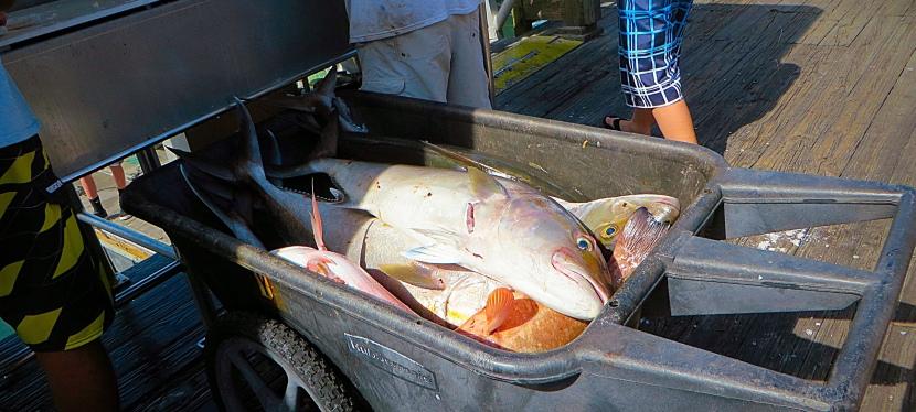 Fishing… Hmmmm I Think That IsNext!