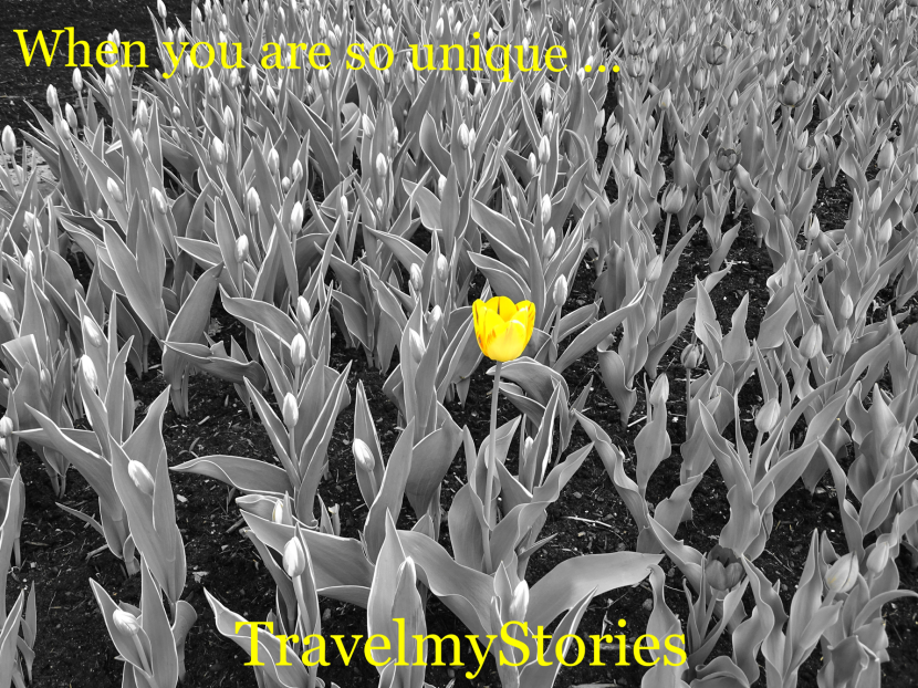 How TravelmyStories was born?