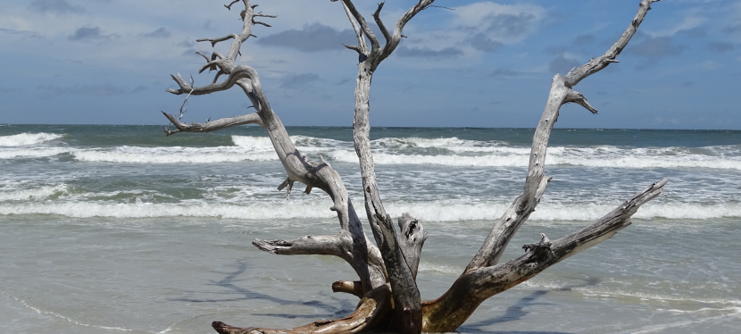Our Little Adventure at Little Talbot Island State Park