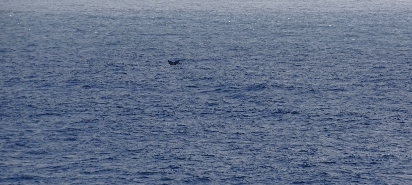 Tiny Fluke In a VastOcean