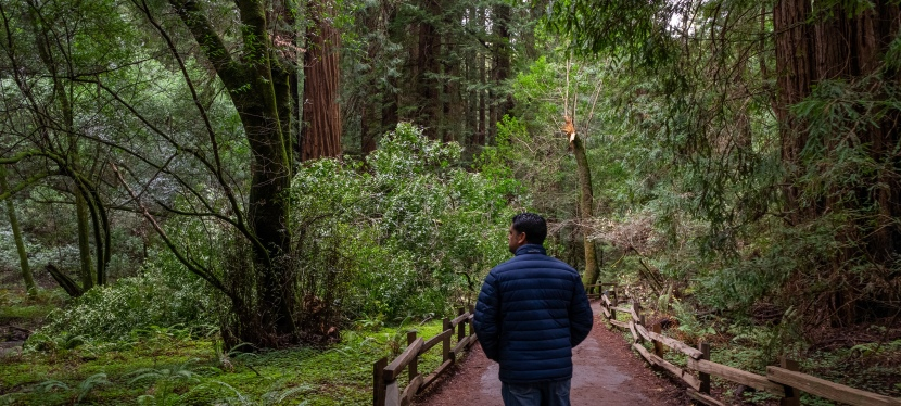A Walk Through Muir Woods in California