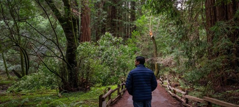 A Walk Through Muir Woods inCalifornia