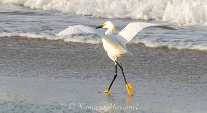 Elegance With Yellow Feet