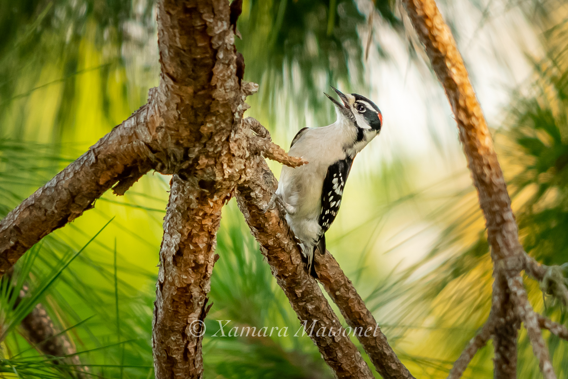 The Anhinga and The Woodpecker