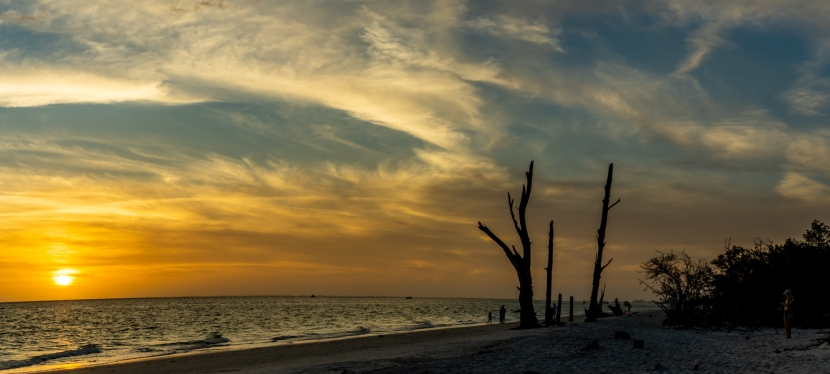 Looking for Dry Trees at Lovers Key StatePark